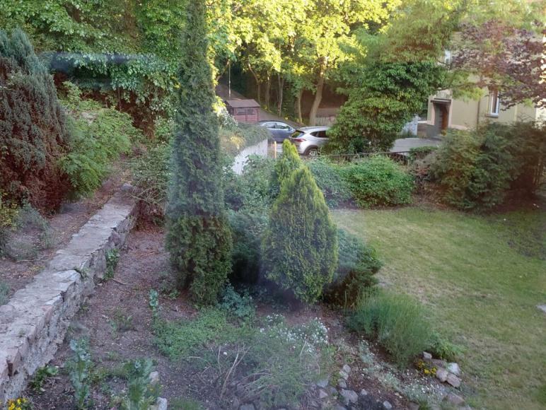 ogród wczesna wiosna