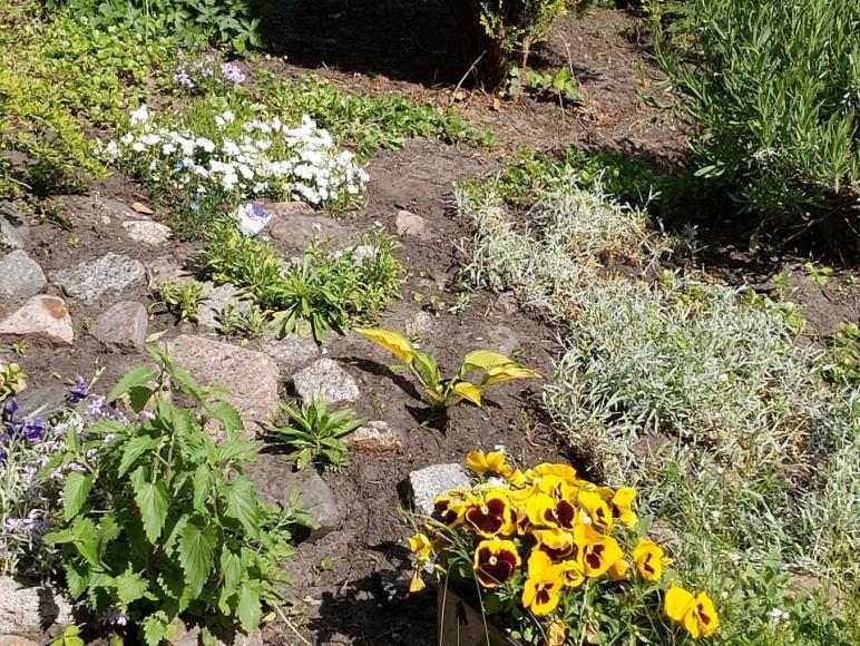 ogród na koniec maja