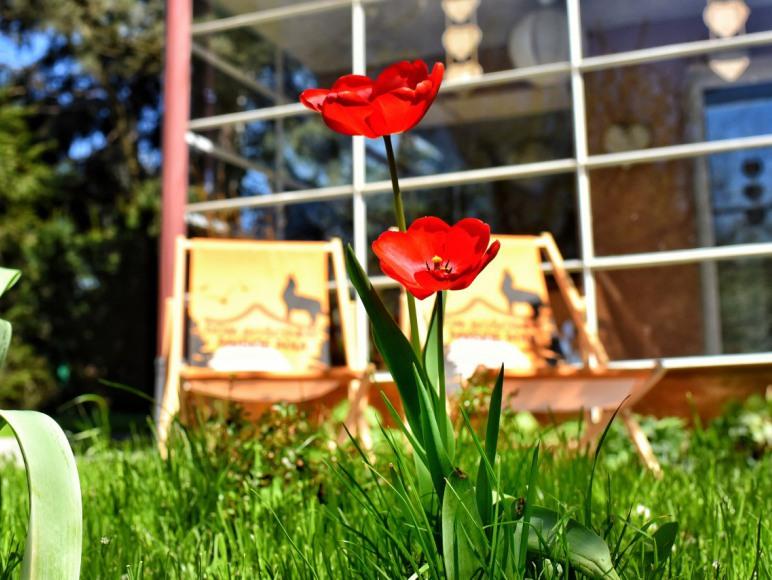 Piękne kwiatuszki