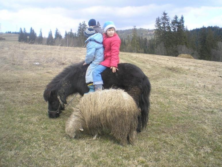 dzieci i zwierzeta