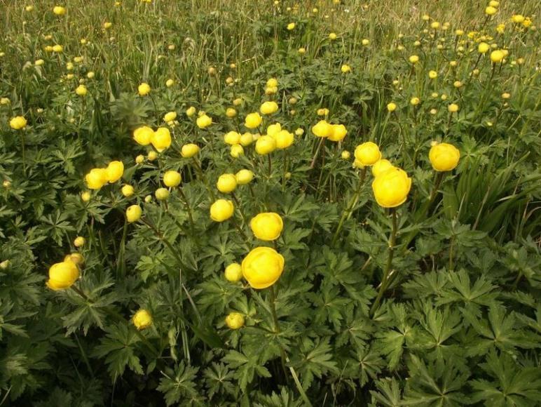 Agroturystyka Cichy Kąt