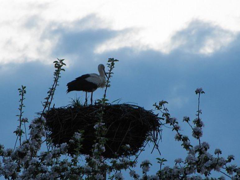 Obok domków gniazdo bocianie