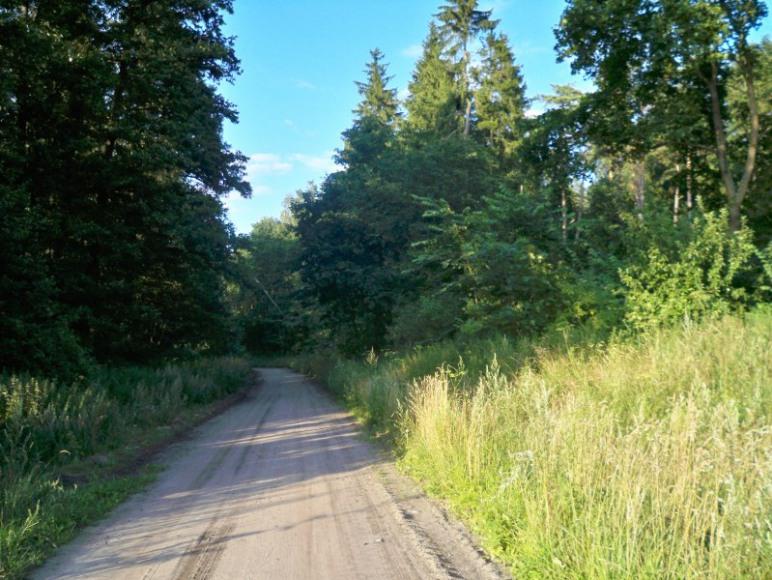 Ścieżka rowerowa oznaczona do Grunwaldu.