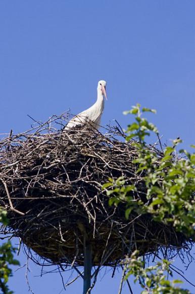 Bocianie gniazdo na naszej posesji