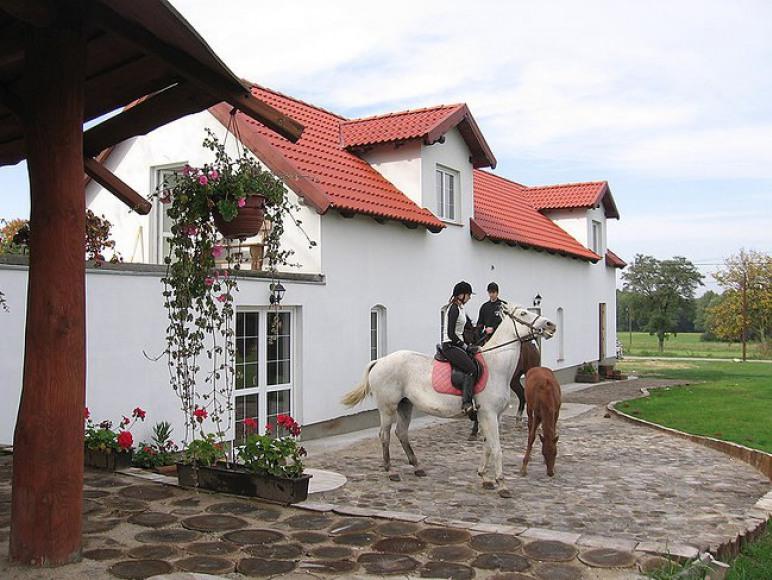 Do dyspozycji konie