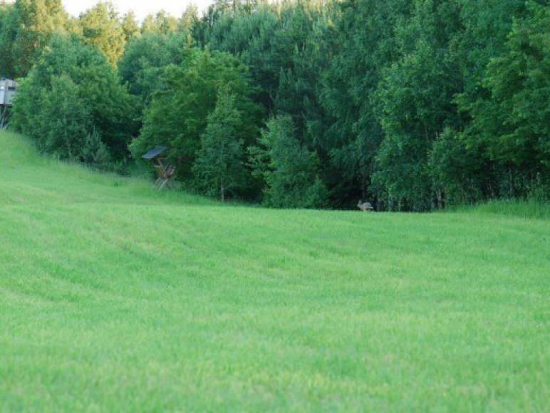 polana przed domem