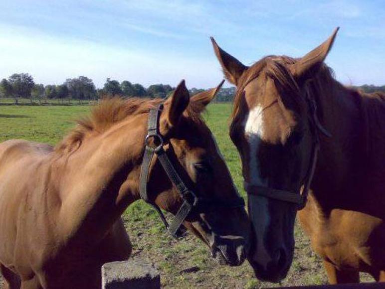 Agroturystyka Mustang