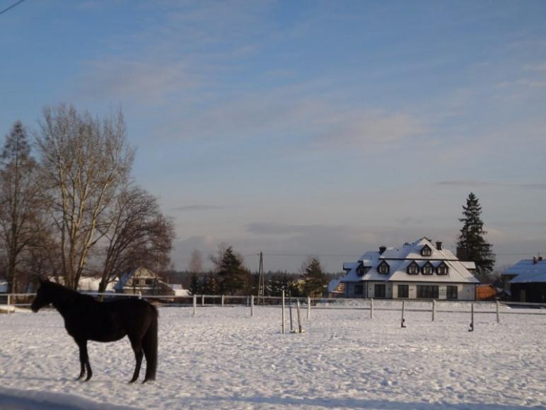 z pensjonatem sąsiaduje stadnina koni