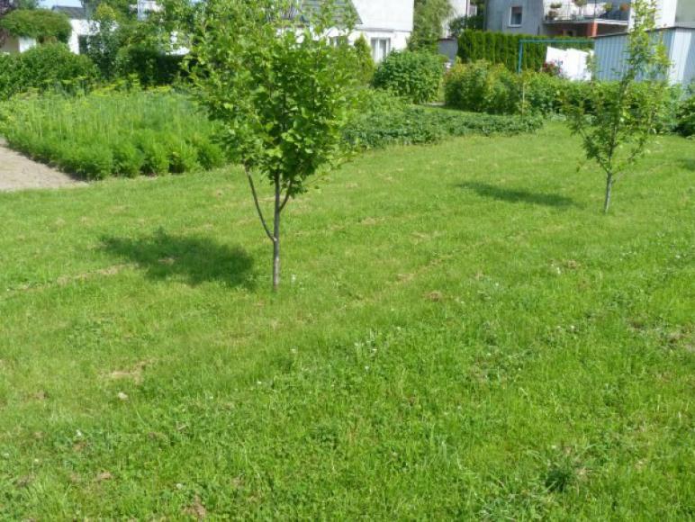 Ogródek- idealny do opalania :)