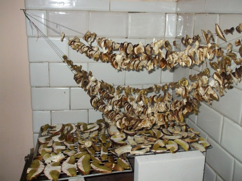 Suszenie borowików 60 szt