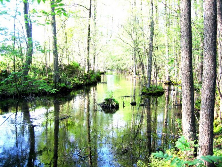 rzeka wda- spływy kajakowe