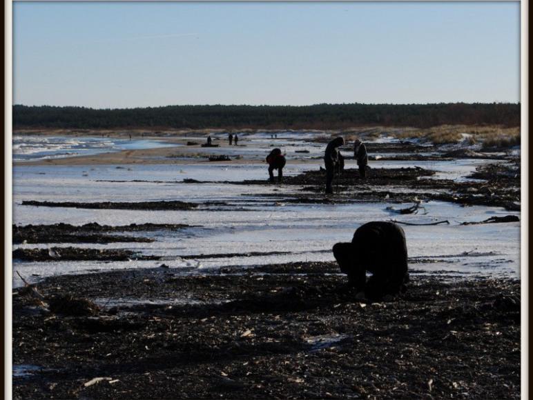 Plaża w Mikoszewie i poszukiwacze bursztynu