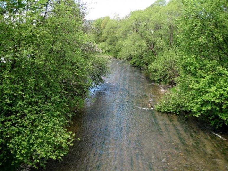 Rzeka Jasiołka