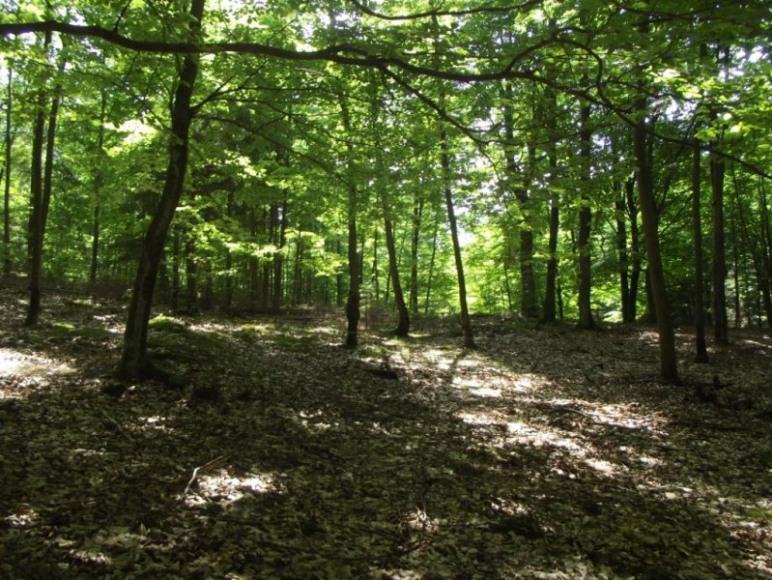 Grzybodajny las