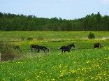 Łąki i konie