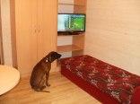 Domek piętrowy - pokój z telewizorem i Maksem