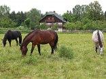 konie z naszej stajni na pastwisku przy domu