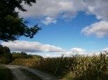 Noclegi - Tarlagowy Bór