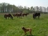 Gospodarstwo Agroturystyczne i Ośrodek jazdy konnej RAMIDES