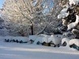Pasieka Wirty zimą