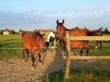 Agroturystyka Jutrzenka - Wczasy w siodle