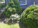 Ogród i miejsce na grila