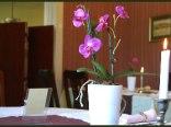 Hotel U Kota Wasyla