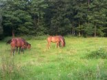 Sąsiedztwo stadniny koni umożliwia jazdę konną z instruktorem.