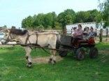 Towarzystwo Rolnictwo I Turystyka-Stadnina Koni Pola Krystyna Drzewiecka