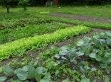 warzywniak z tylu domu