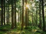 lasy Borów Tucholskich