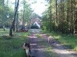 Leśny Dom Pod Pawiem w Mokrzecu