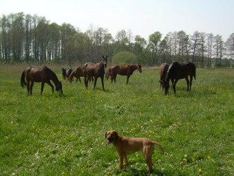 """Gospodarstwo Agroturystyczne i Ośrodek jazdy konnej """"RAMIDES"""""""