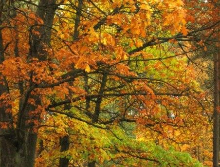 piękna jesień i grzyby