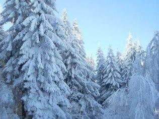Sezon narciarski - Ekokrasnoludki