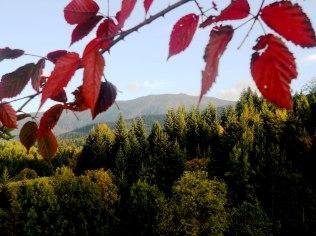 Jesienna promocja w Beskidach! - Domek Gościnny u Doroty