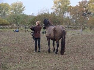 Oprowadzanie na koniach, podstawy kontaktu z końm - Dom i Ogród Margiki
