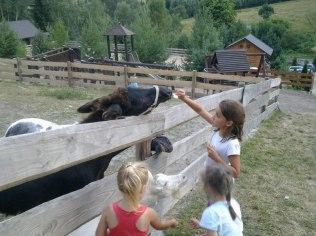 Pomysł na wycieczkę szkolną - Agroturystyka Studzienno& Zagroda Rekreacyjna
