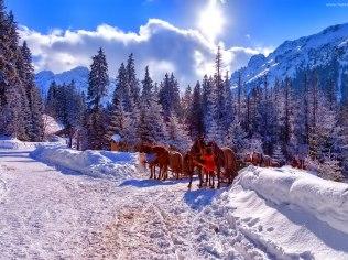 Sezon narciarski - Willa u Łapów