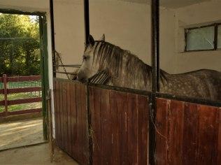 Boksy dla koni - Dom na Krzemienicy- Dom całoroczny
