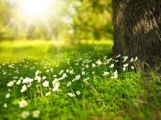 Wielkanoc w Bieszczadach - wyprawa po wiosenne kac - Dom Kowala