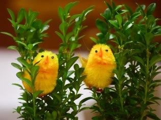 Wielkanoc w pensjonacie Zameczek - Pensjonat Zameczek