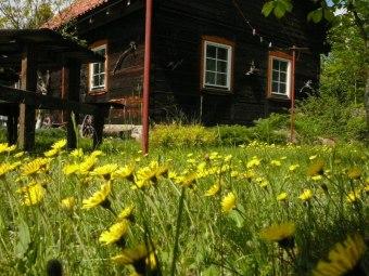 Chata w Puszczy